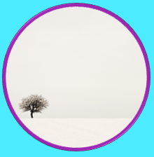 Minimalism - A Tree in White